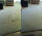 b-a-citrusolution-carpet-cleaningliving-rom