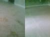petstains-jpg-w560h210-640x480