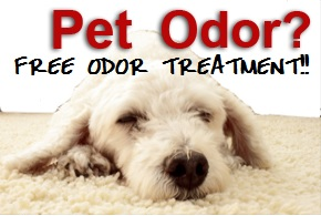 Pet Odor Removal Alpharetta GA